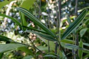 Island Breezes Bamboo