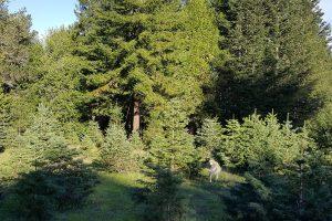 Santa's Trees