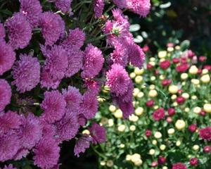 Bloomfield Cutting Garden