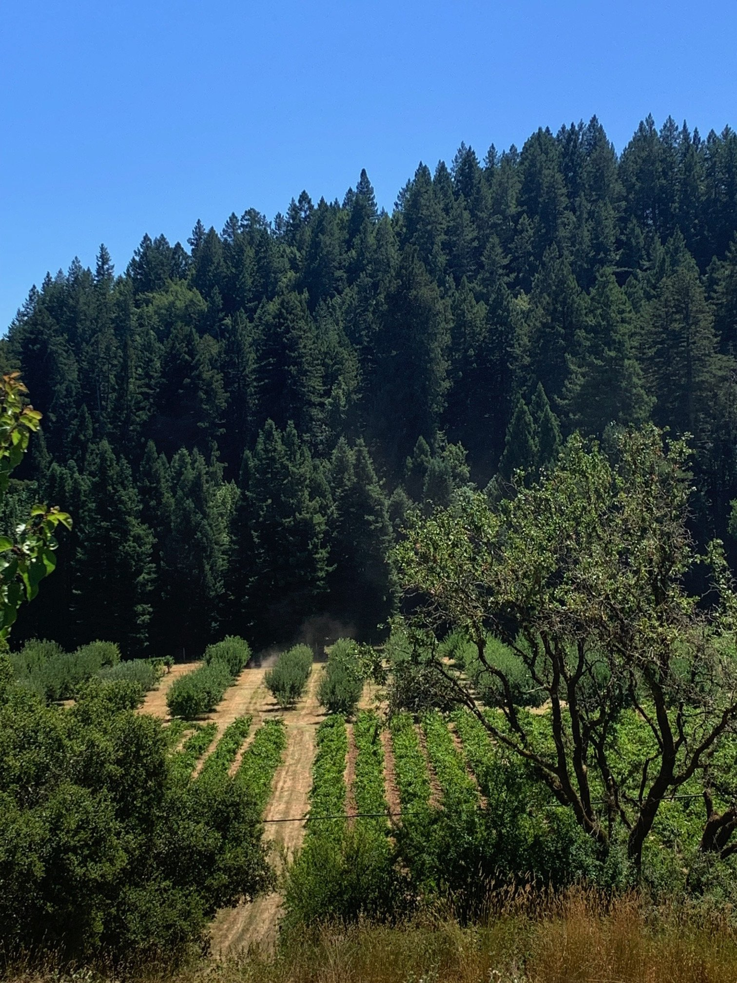 PQR ( Por Qué Ranch) is 5 acres of Russian River Valley farming bliss. Located on Westside Road, it is one of the only ranches that grows