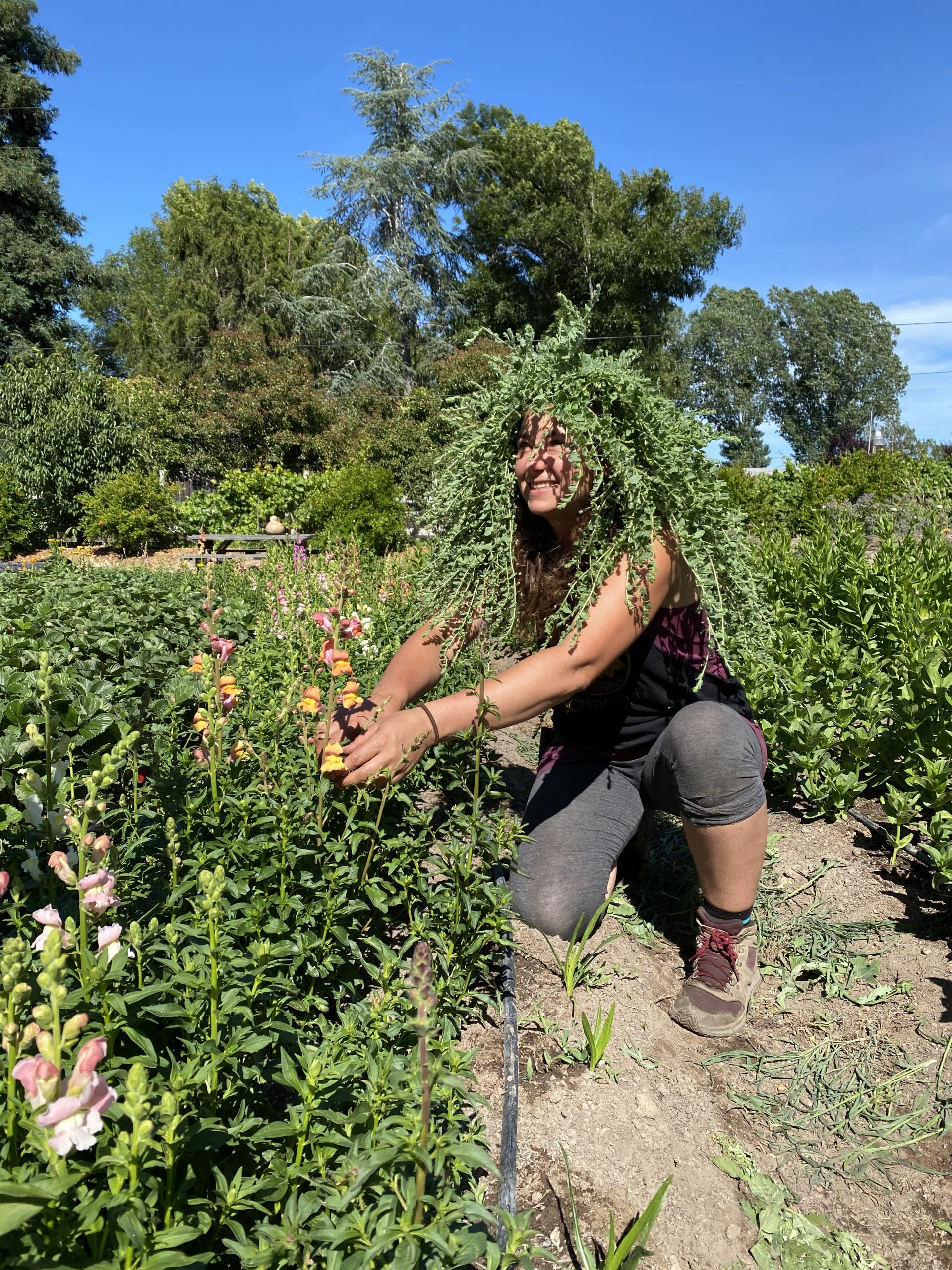 Bree Douma harvesting snapdragons at her farm adjacent to the farmstand
