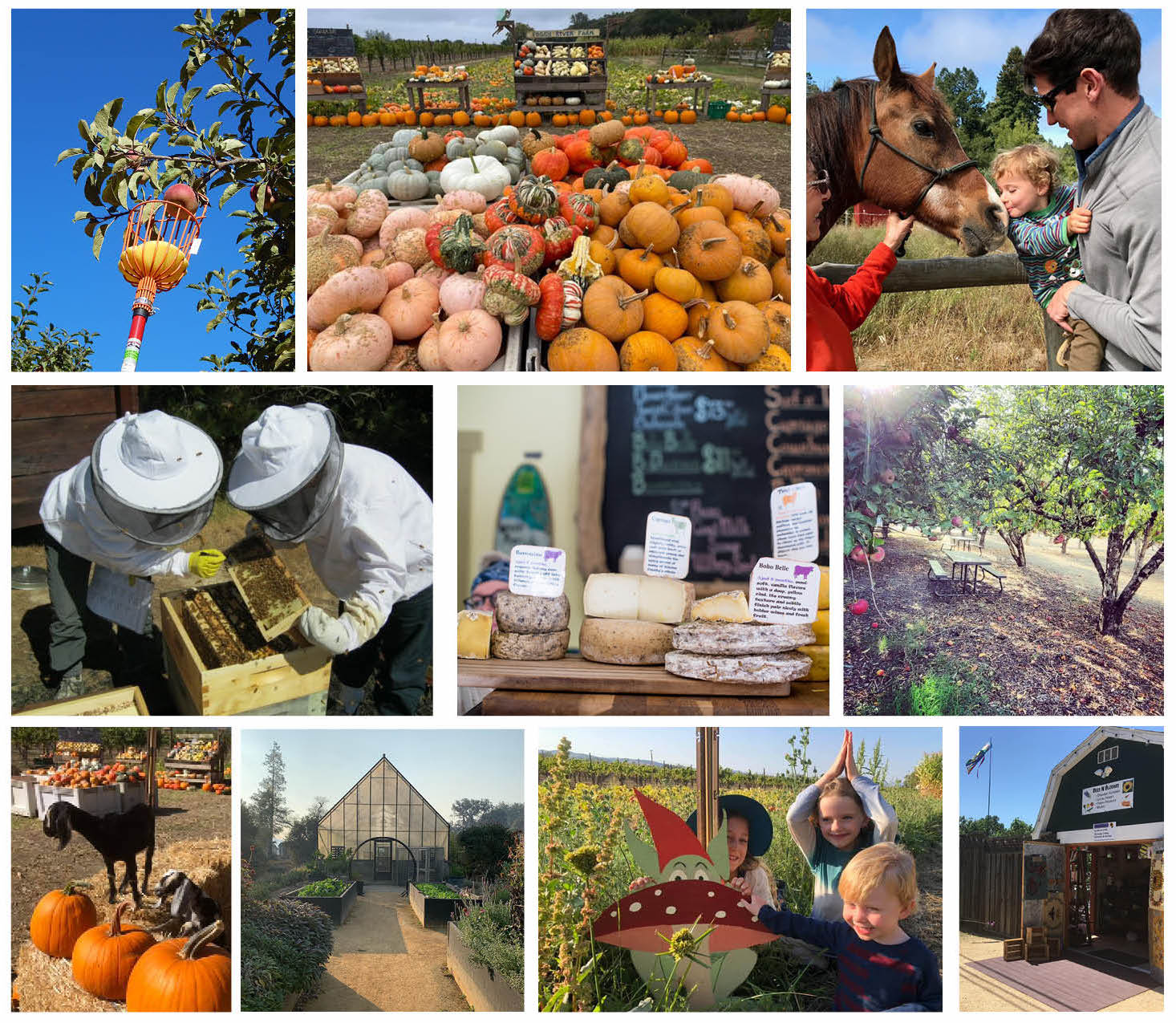 collage of farms