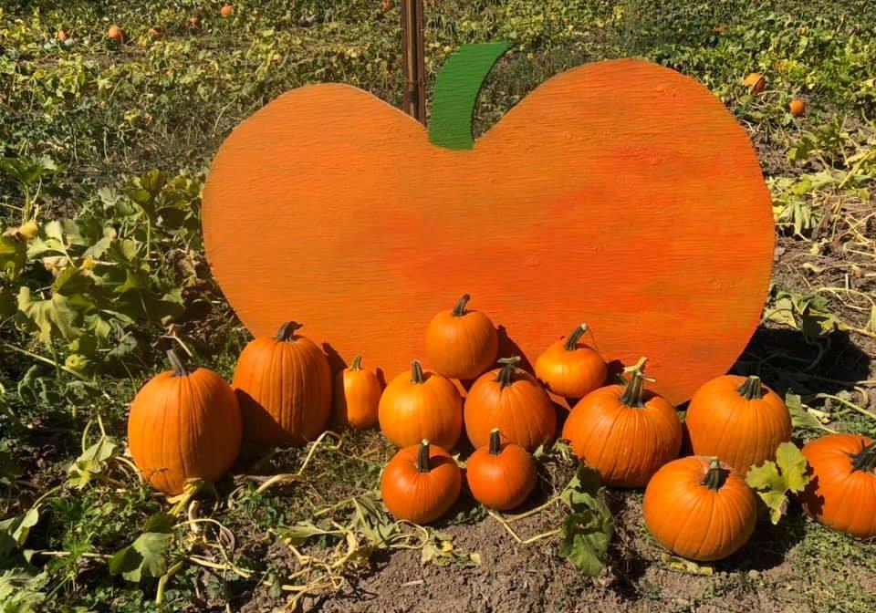 foggy river pumpkins
