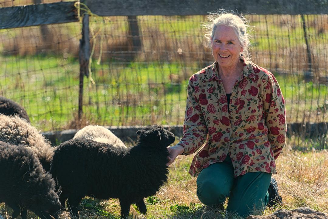 Heart Felt Fiber Farm Sonoma County Farm Trails